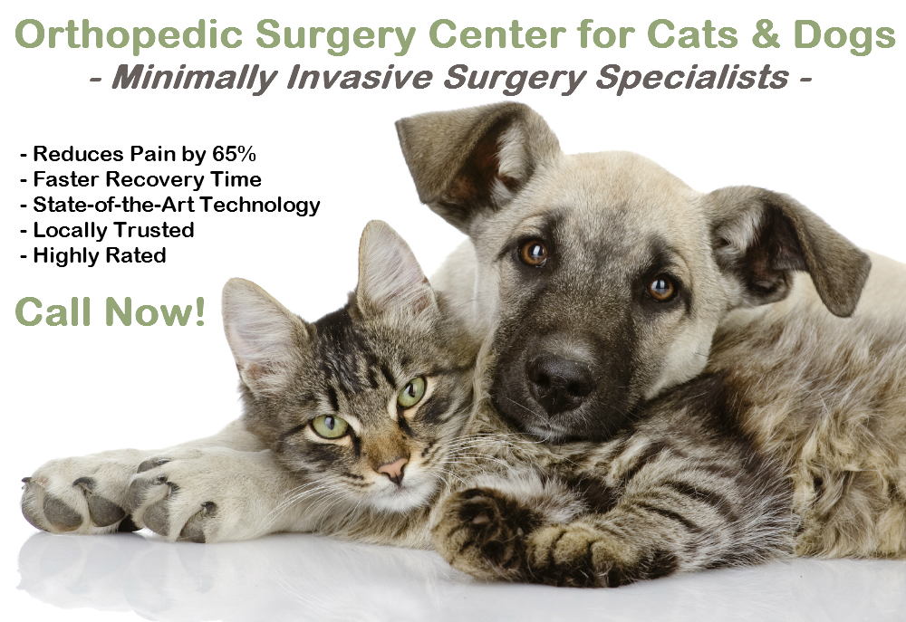 Dog Orthopedic Surgeon in Orange County