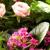 Huntley Floral