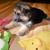 K9 Puppies Deal