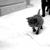 Cats Meow Rescue & Adoption
