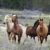 Horseback Oregon