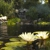Koi Market Aquatic Gardens