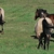Rainier Equine Hoof Recovery