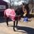 Masconette Farm - Horse Boarding - Carriage Driving