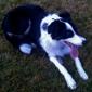 Pet Rescue-Humane Society of Eastern - Hermiston, OR