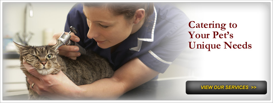 Cat Veterinary Care