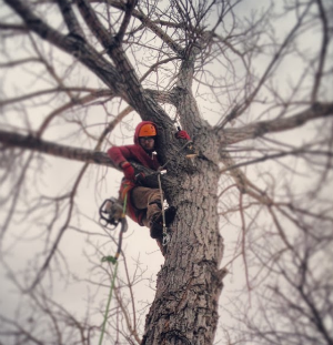 tree services colorado springs