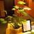 Yi Li Massage, LLC