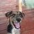 Bayshore PetSitting and More