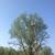 1st Call Tree Service LLC