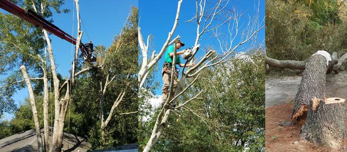 tree-c93