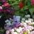 Cal Nevada Wholesale Florist