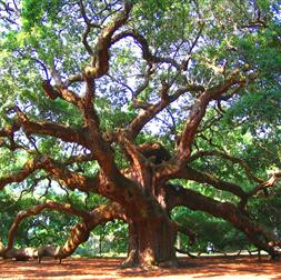 arbor images tree