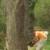 TNT Tree Service