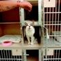 Cambridge Pet Care Center