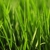 Williams Lawn Care & Landscaping Inc.