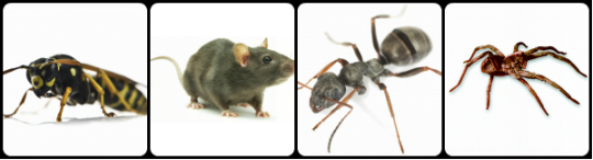 Exterminator Services in Akron