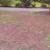Alabama Lawn Masters Inc