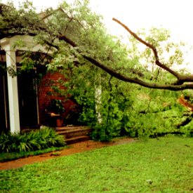 Storm Damage Tree Services