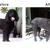 FancyFur Mobile Dog Grooming