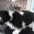 CC'S Dog Grooming