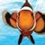 Reef's Aquatic