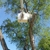 Tree Services of Omaha