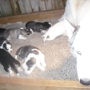 Puppy Heaven & Spa