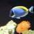 Aquarium Service and Design Inc