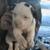 Old Country Kennel Ke-Stern American Bulldogs