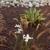 GrowPro Landscape
