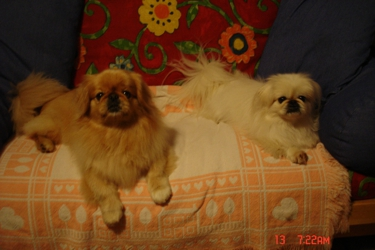 Dapper Dogs Grooming Studio