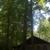 Kauffman Tree & Lawn Care