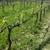 Wildside Winery