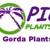 Punta Gorda Plants