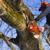 Johnson's Tree Service & Stump Grinding