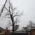 Louisiana Tree Company, LLC
