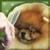 Burlane Cat & Dog Boutique