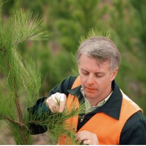 tree pruning 2-300x300.jpg