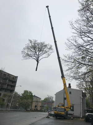 Skyhook Tree Cane