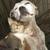 Meriden Humane Society Animal Shelter & Rescue Facility