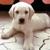 Pro Pet Insurance