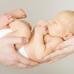 Adoption Center-