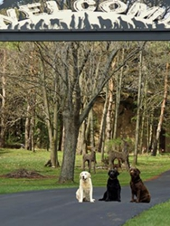 Fort Hyde Kennels Inc.