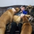 Titan's Doggy Daycare