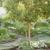 Capital City Tree Care LLC