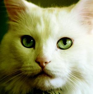 cats_vet