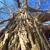 Ahlum & Arbor Tree Preservation