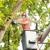 Holbert's Tree Service