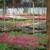 Broman's Greenhouse